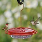 nectar feeder