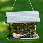 suet feeder - suet feeder for birds