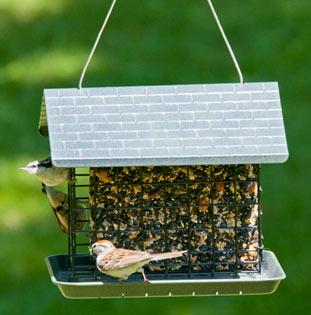suet feeder - suet feeder for birds
