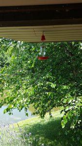 hummingbird feeder - who drank the hummingbird juice