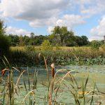 Shaker Trace wetlands