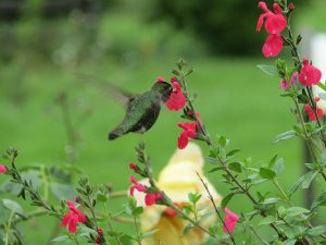 Why Do Hummingbirds Fight? | A Birds Delight