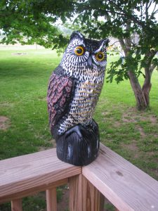 great horned owl decoy - its a great horned owl