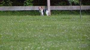 Millie in yard