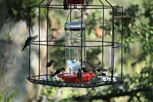 caged hummingbird feeder - who drank the hummingbird juice