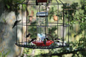 caged hummingbird feeder - who drank the hummingbird juice