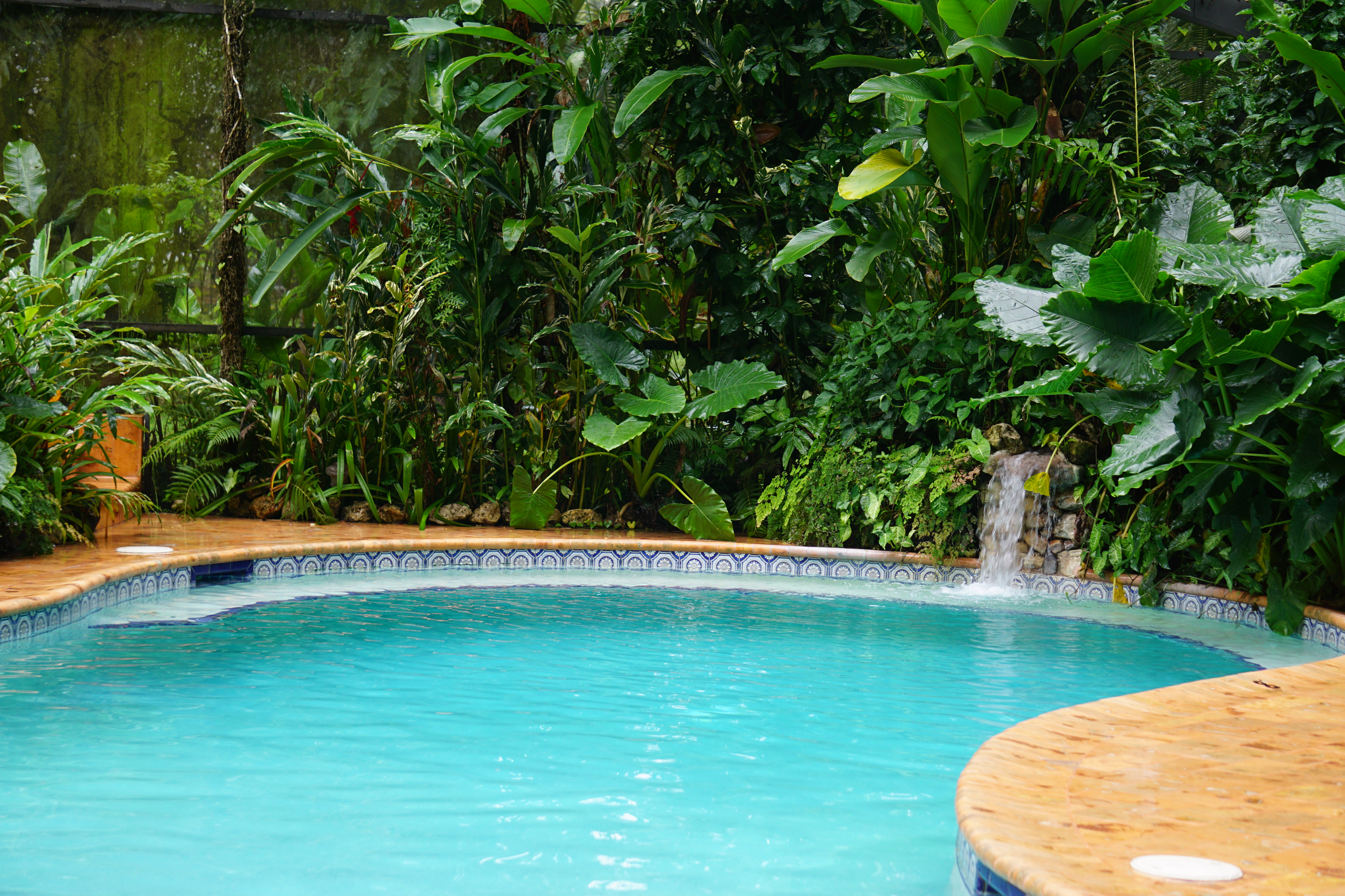 swimming pool chan chich - birding belize the jungle