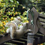 Squirrel at feeder -