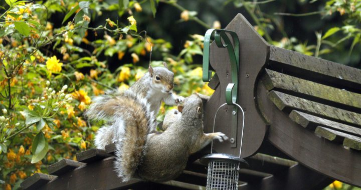 Squirrel at feeder -