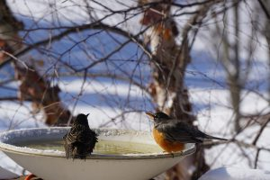 birds at birdbath - bird feeding stations