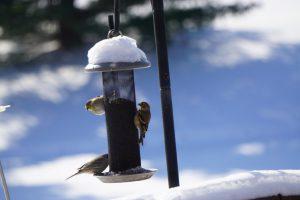 finches on feeder - bird feeding stations