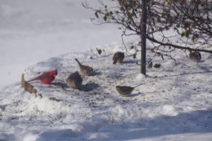 birds at feeder - bird feeding stations
