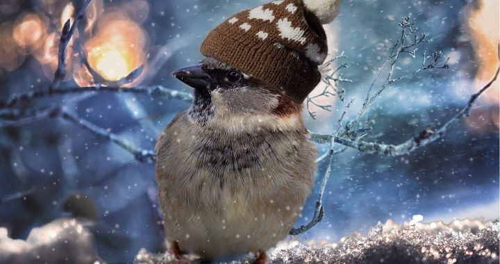 sparrow - how do birds keep warm?