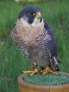 peregrine falcon - peregrine falcon speed