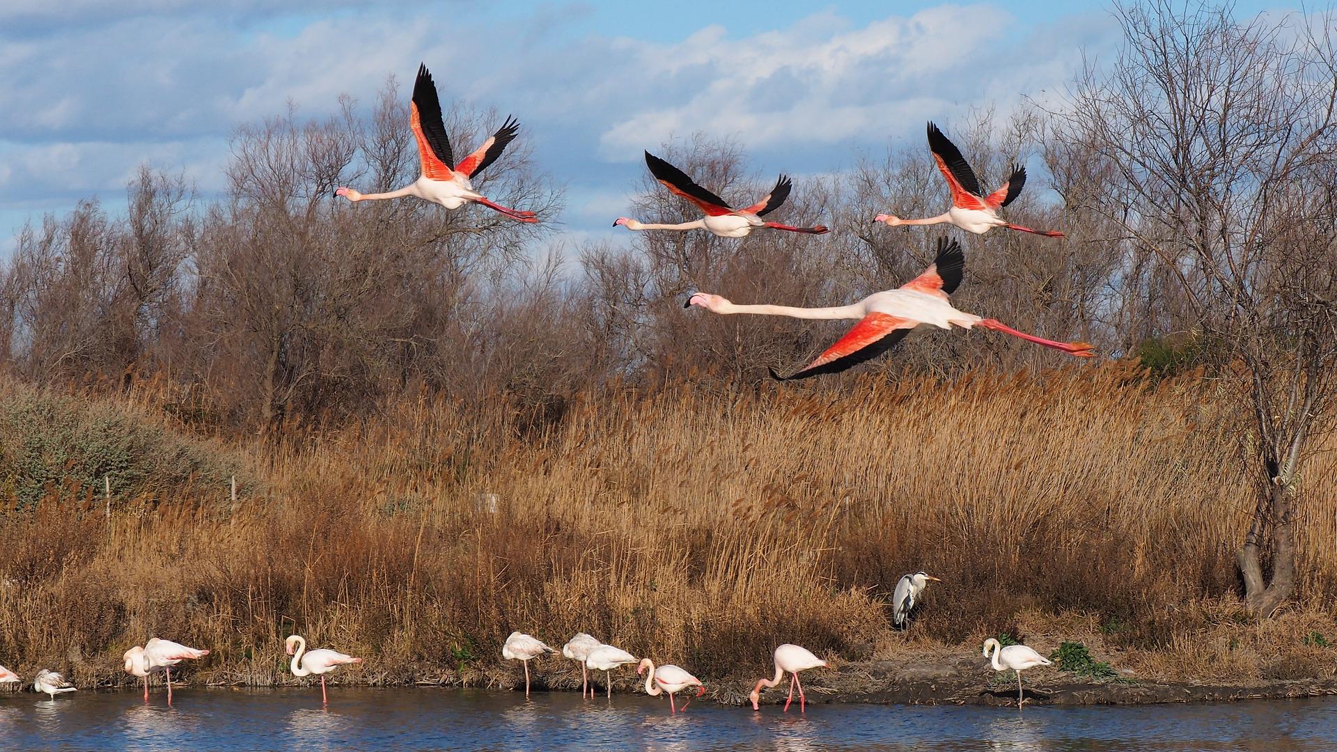 flamingo - where do flamingos live