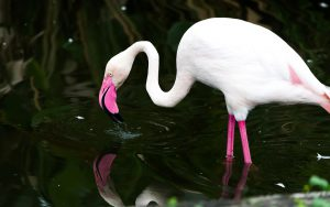 flamingo - where do flamingos live