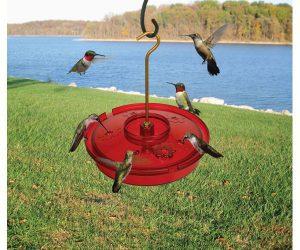 hummingbird haven - top 5 hummingbird feeders