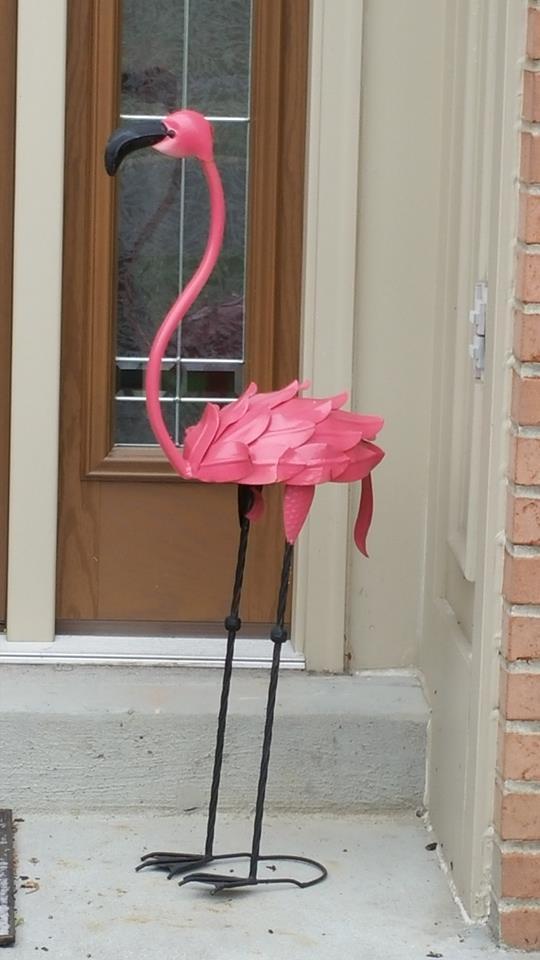 flamingo - where to find flamingos