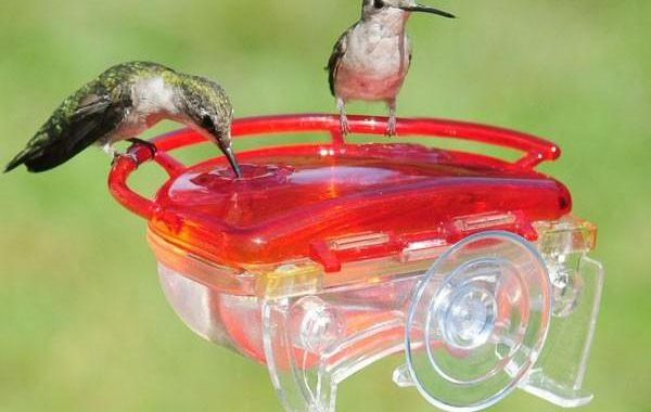 window hummingbird feeder - top 5 best hummingbird feeders