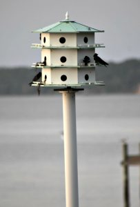 purple martin house - purple martin birdhouse