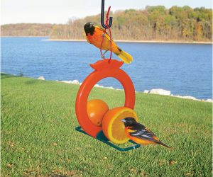 oriole orange feeder - how to attract orioles to your yard