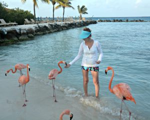 Feeding Famingos in Aruba - Flamingo Beach Aruba