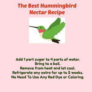 hummingbird nectar recipe - the best hummingbird nectar recipe