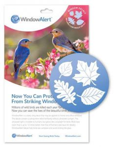 window alert - why do birds run into windows