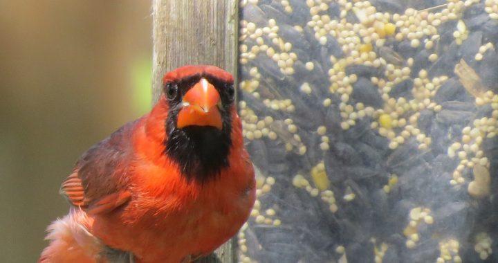 Why Do Birds Hit Windows? | A Birds Delight