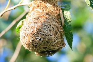 bird nest - identifying bird eggs is easy