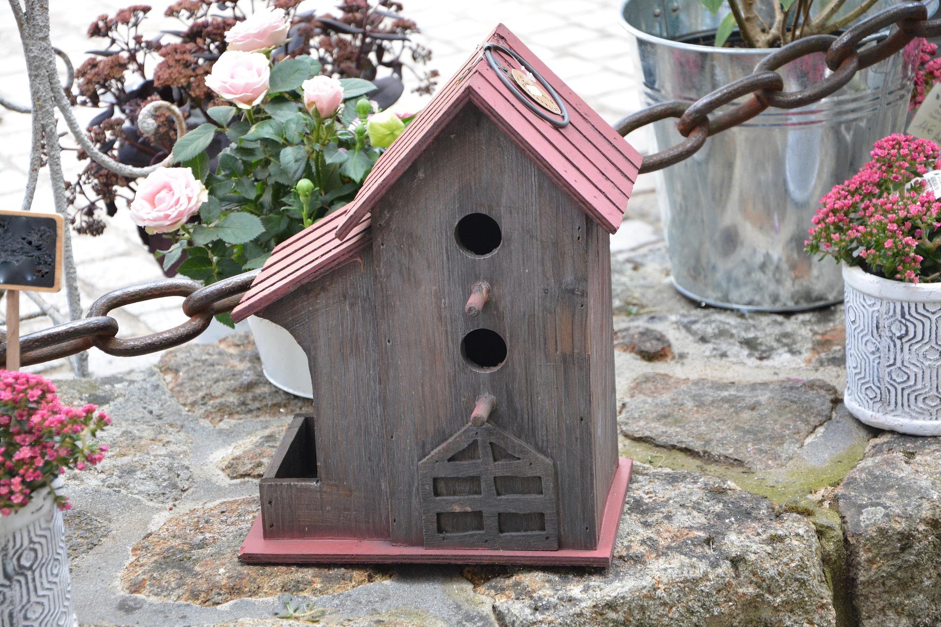 bird house - house wren nesting habits
