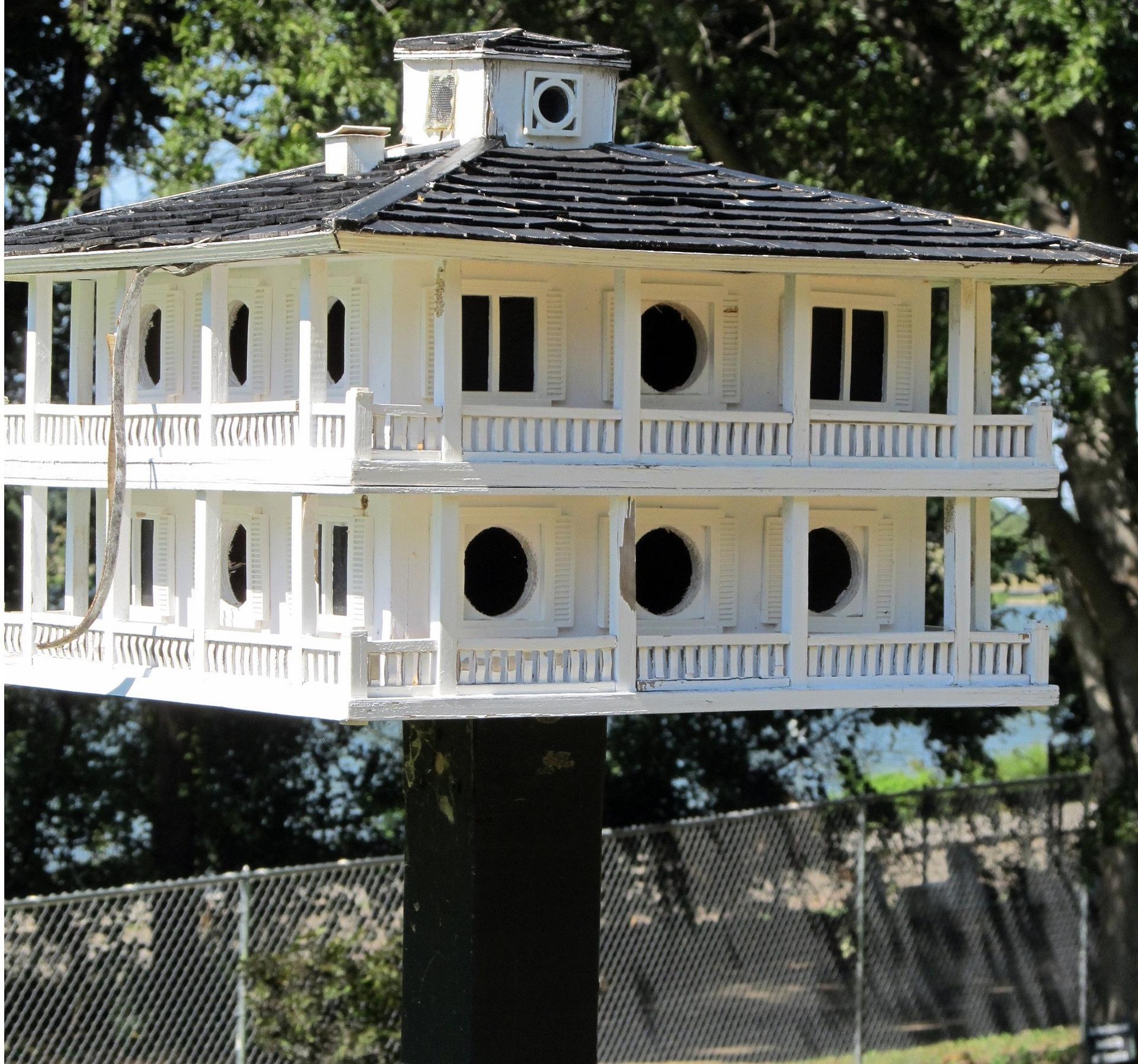 birdhouse - where are purple martins now