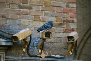 pigeon - 6 effective ways to get rid of pigeons