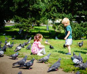 kids and pigeons - 6 effective ways to get rid of pigeons