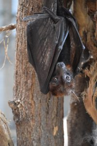 bat - 10 interesting facts about bats